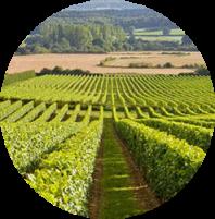 vinyard 1